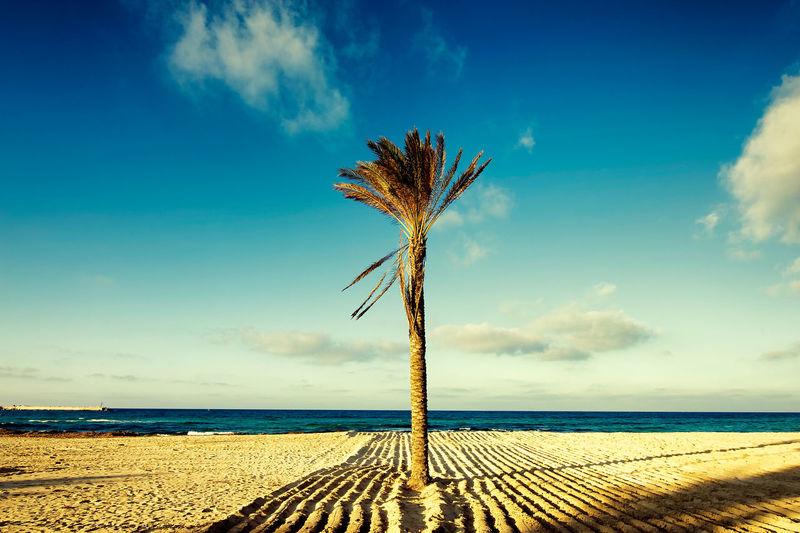 EyeEm Italy EyeEmNewHere Palm Tree Sicilia Sicily The Week On EyeEm Your Ticket To Europe Beach Beauty In Nature Cloud - Sky fine art photography Horizon Over Water Nature No People Outdoors Sand Scenics Sea Siciliabedda Sky Straight Lines Symmetry Tranquil Scene Tranquility Water
