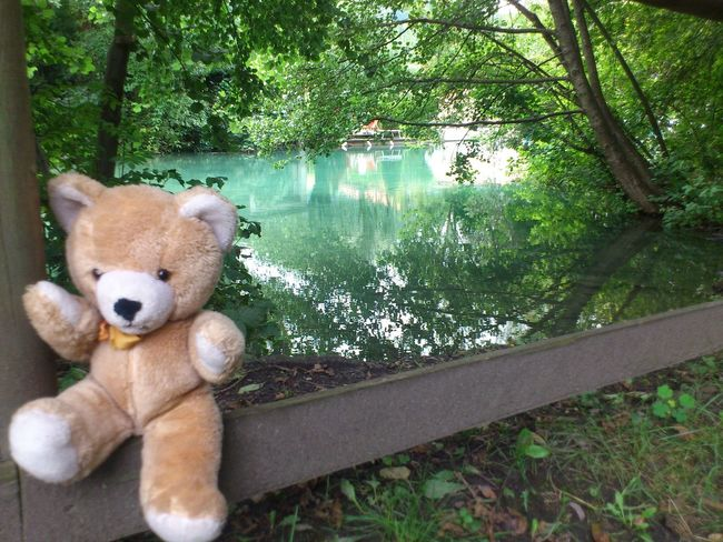 Beauty In Nature Chill Close-up Mammal Nature Newest Newest Upload No People Outdoors Popular Photos Portait Recentforrecents Teddy Teddy And Friends Teddy_on_tour Tree light and reflection Been There. Connected By Travel Lost In The Landscape