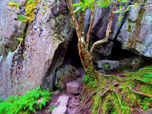 Grayson Highlands National Park Nature Rock Formation Tree Trunk explore First Eyeem Photo