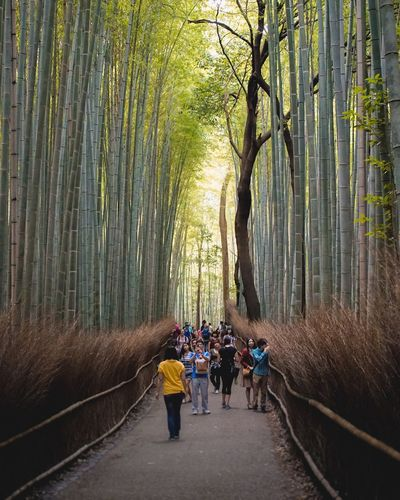 Bamboo Grove Tree Real People Nature Forest Men Outdoors Walking