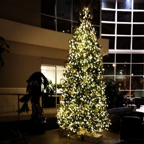 Christmas tree brings out the holiday joy. Christmas Holiday Office Yqr
