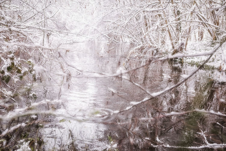 Tree Plant Nature No People Winter Cold Temperature Day Bare Tree Snow Tranquility Branch Beauty In Nature Outdoors Water Frozen Land Tranquil Scene Reflection