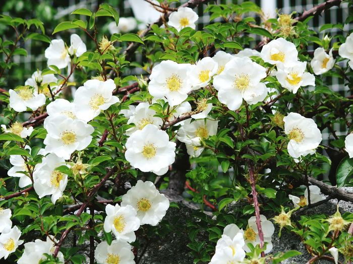 Blossom Nature