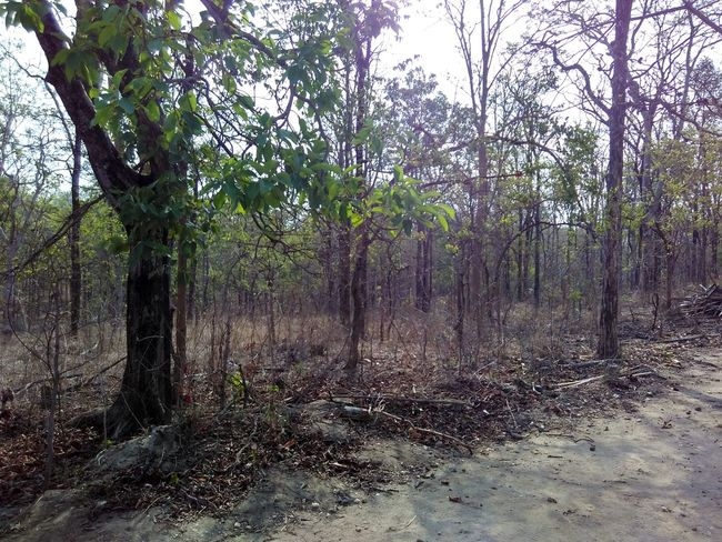 Landscape Tree Forest Dry Forest The Purist (no Edit, No Filter)