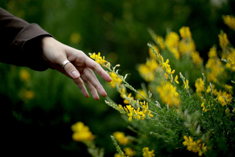Hand of a woman reaching yellow flowering plants on field