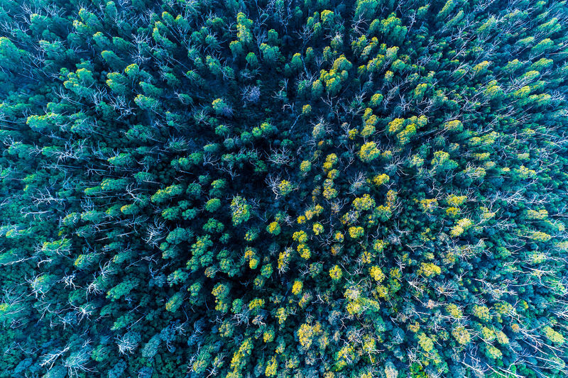 Top down view of eucalyptus forest at sunset Forest Growth High Up Horizon Landscape National Park No People Non-urban Scene Plant Sky Tranquil Scene Travel Locations Aerial Australia Background Beautiful Beauty In Nature Drone  Environment Gum Trees Looking Down Lookout Nature Nobody Outdoor Outdoors Scenic Scenics Top Down Travel Travel Destinations Tree Tops Trees View Yarra Ranges