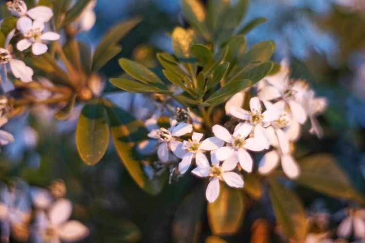 Backgrounds EyeEm Selects Flower Tree Flower Head Branch City Springtime Blossom Close-up Sky Plant Flowering Plant Botany Plant Life Blooming
