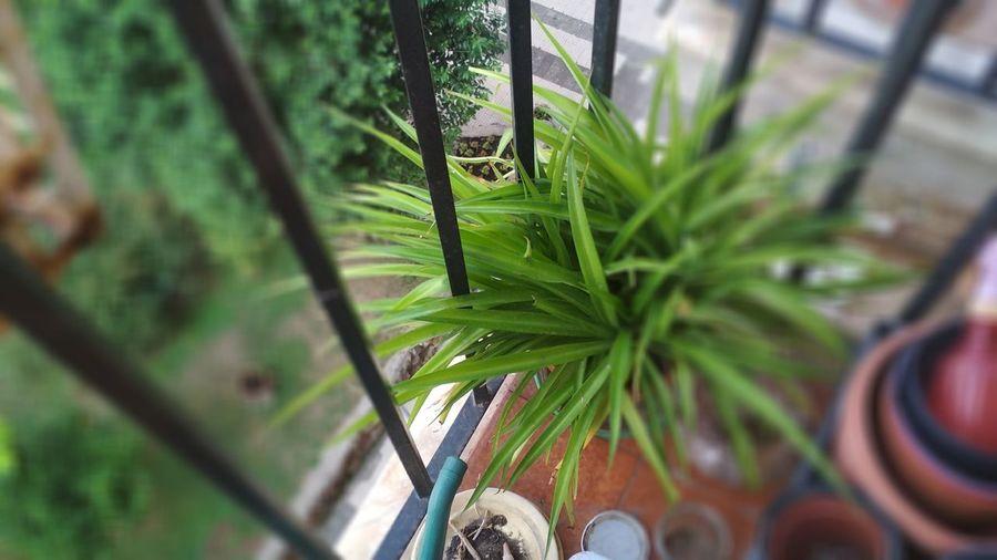 Balcony Tilt