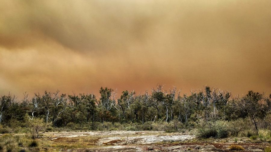EyeEm Selects Nature Tree Outdoors No People Landscape Gold Colored Smoke Forest Fire