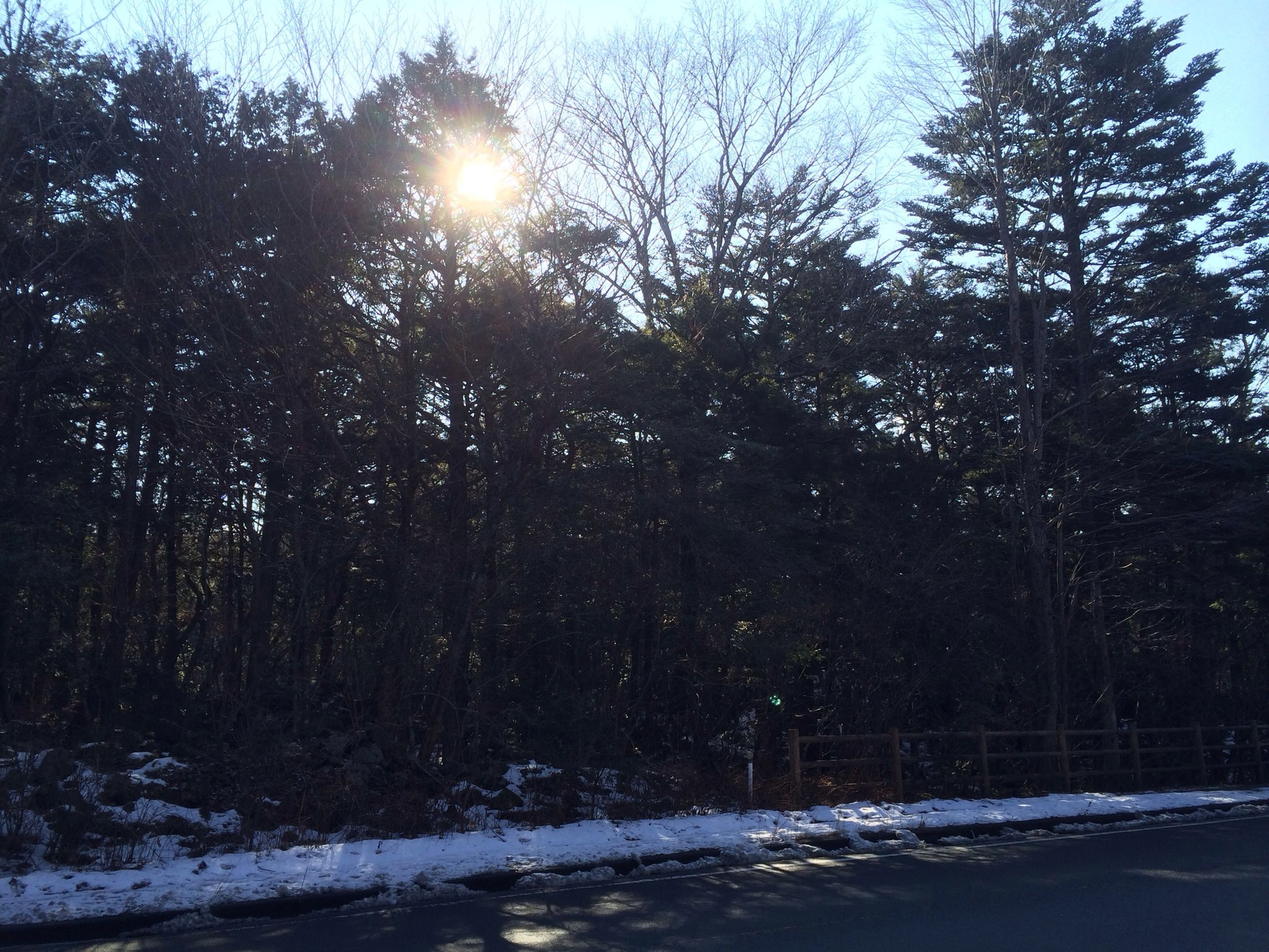 snow, winter, cold temperature, season, tree, weather, frozen, tranquility, covering, nature, bare tree, tranquil scene, beauty in nature, scenics, cold, forest, covered, landscape, non-urban scene, white color
