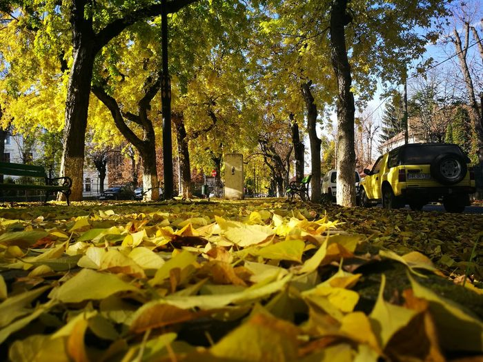 Autumn Autumn Colors Autumn Colours Yellow Leafs Outdoors Tree City Street Cityphotography CityWalk Colour Of Life Mycity Adapted To The City Adapted To The City
