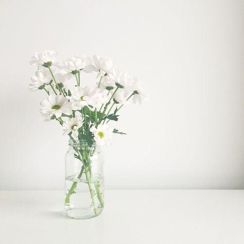 Minimal - [ The White Project | http://www.sayinghello.me/category/white-projects/ | IG: @sayinghello ] Flower Freshness Indoors  Minimal Minimalism Minimalist Studio Shot Vase White White Background White Color