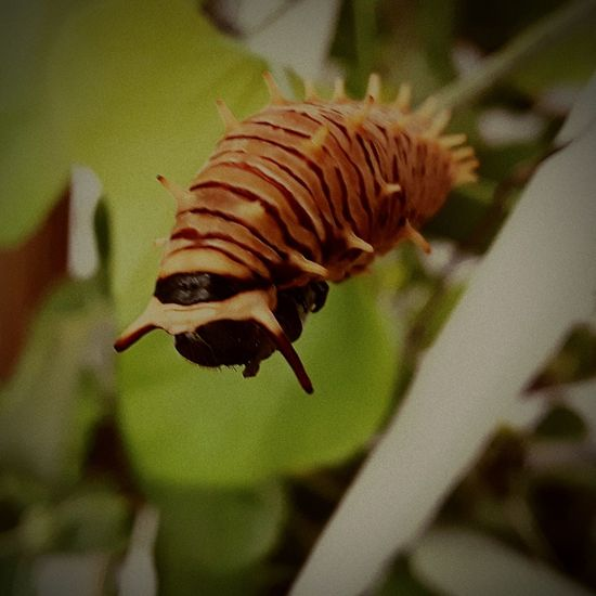 Catapillars nature Close-up Animal Themes Butterfly Butterfly - Insect Wildlife Animal Antenna Pollination