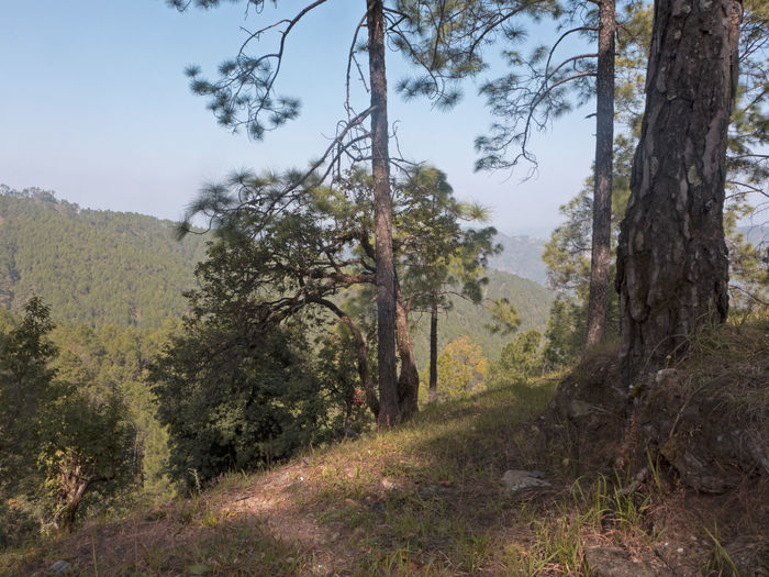 Hike through the Himalayan region Hiking Himalayas India Beauty In Nature Forest Forest Photography Growth Hiking Trail Hill Kumaon Landscape Mountain Nature Plant Scenics Sky Tranquility Tree Tree Trunk Uttarakhand