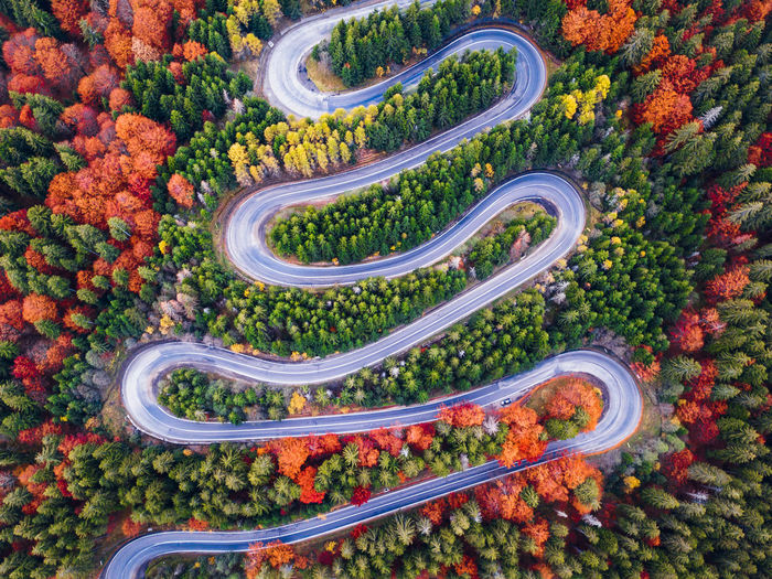 High angle view of plants by road