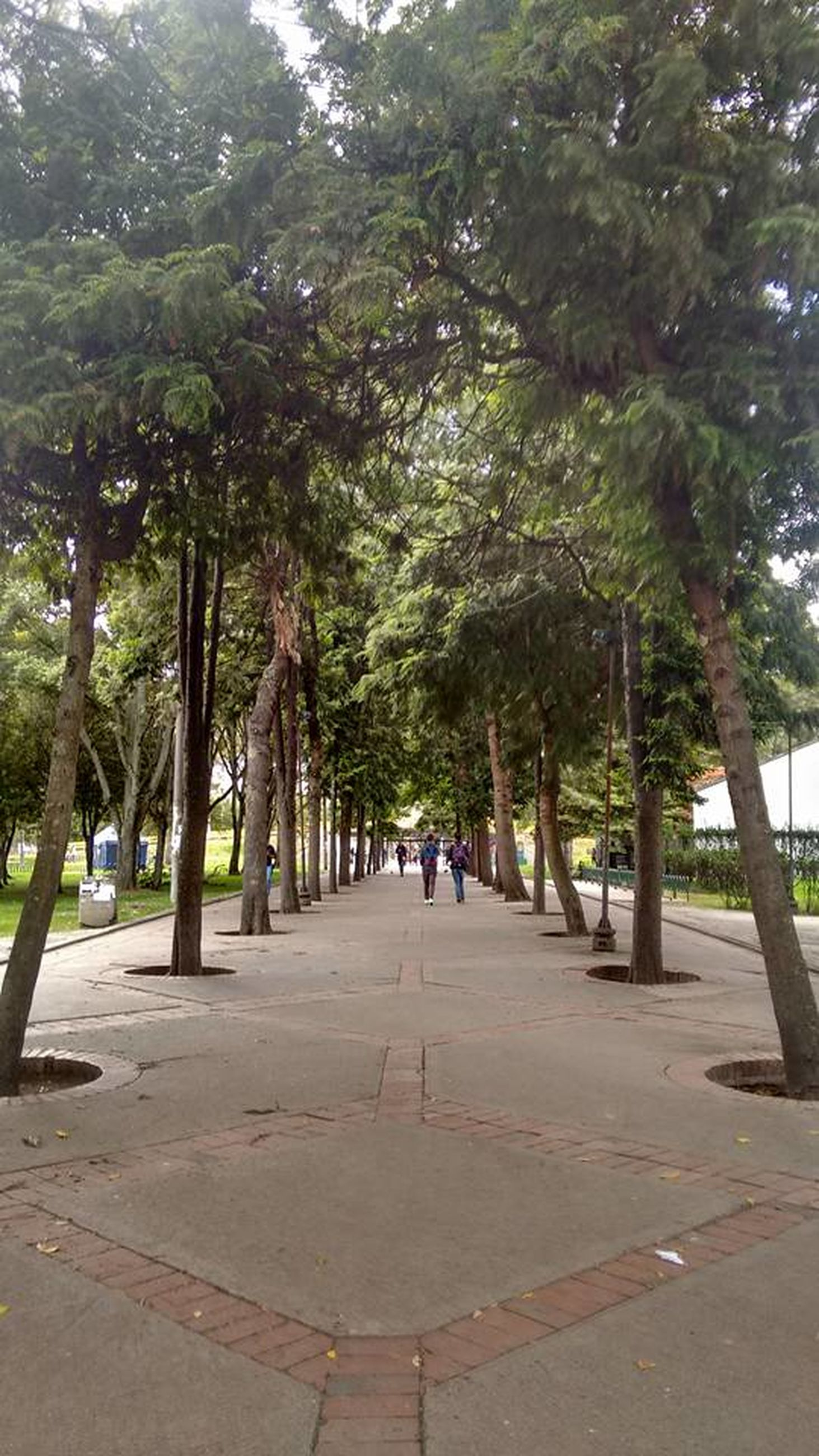 tree, treelined, growth, tree trunk, park - man made space, the way forward, green color, branch, day, tourist, footpath, nature, tranquility, vacations, tourism, travel destinations, walkway, tranquil scene, person, pedestrian walkway, outdoors, scenics, diminishing perspective
