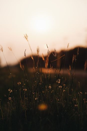 Sky Plant Beauty In Nature Growth Sunset Nature No People Tranquility Scenics - Nature Close-up Land Field Focus On Foreground Wet Environment Tranquil Scene Water Drop Grass Outdoors