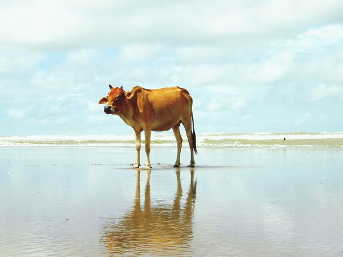 Check This Out Hanging Out Hello World Hi! Taking Photos Relaxing Enjoying Life Cox's Bazar Bangladesh Beach Animal Cow Outdoors Nature Sea No People Water Sky Horizon Over Water Beauty In Nature Out Of The Box