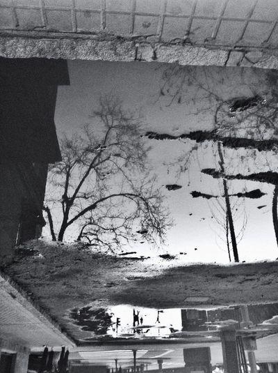 Reflection Blackandwhite Strolling Spring