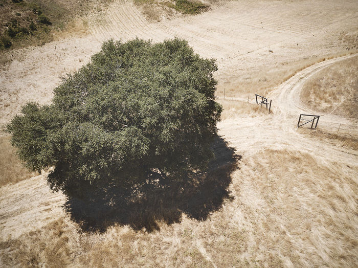 Drone photograph of a field and tree. Plant Tree Nature High Angle View Day Environment Land Growth Transportation Road Landscape No People Tranquility Beauty In Nature Sunlight Tranquil Scene Scenics - Nature Outdoors Field Green Color Aerial View Drone