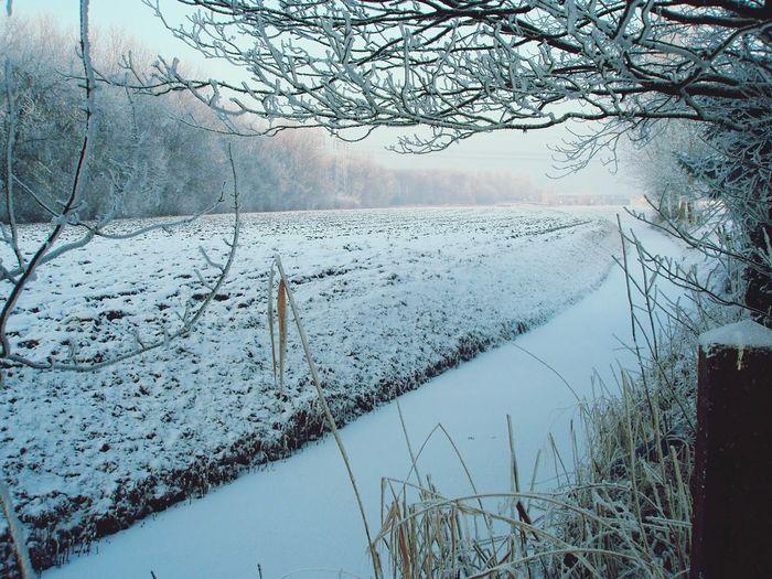 Snow Dikkendijk Zevenbergen
