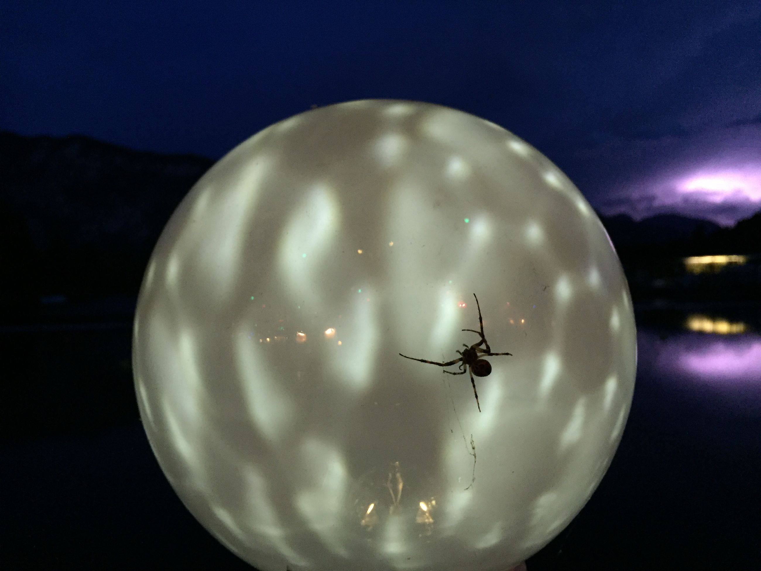 sky, night, flying, invertebrate, moon, nature, circle, illuminated, geometric shape, space, air vehicle, insect, full moon, animal wildlife, airplane, animal themes, focus on foreground, one animal, animal, cloud - sky, no people, astronomy, moonlight