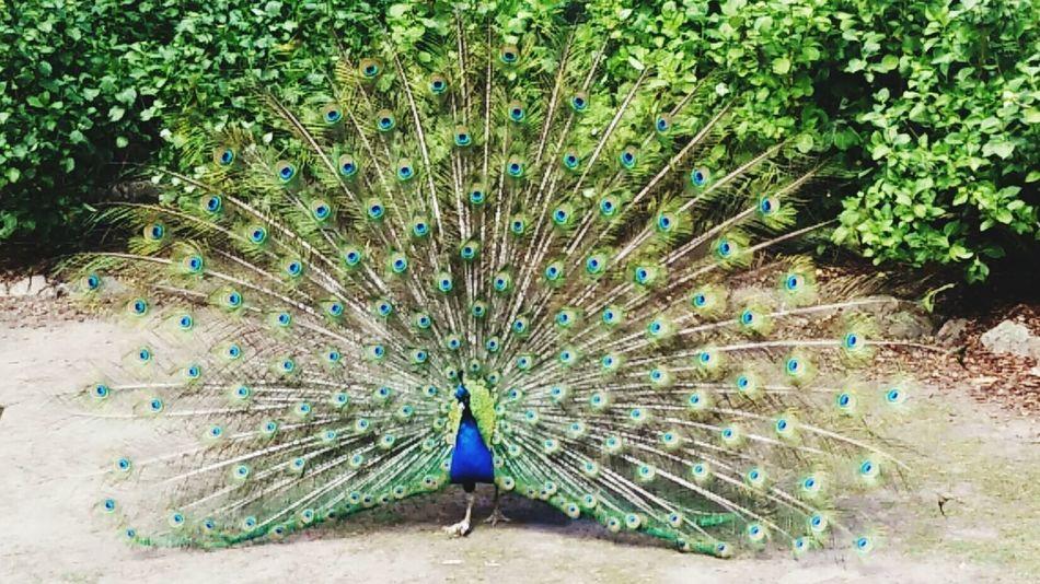 Super pretty man bird Taking Photos Check This Out Enjoying Life Hello World TasmaniaAustralia