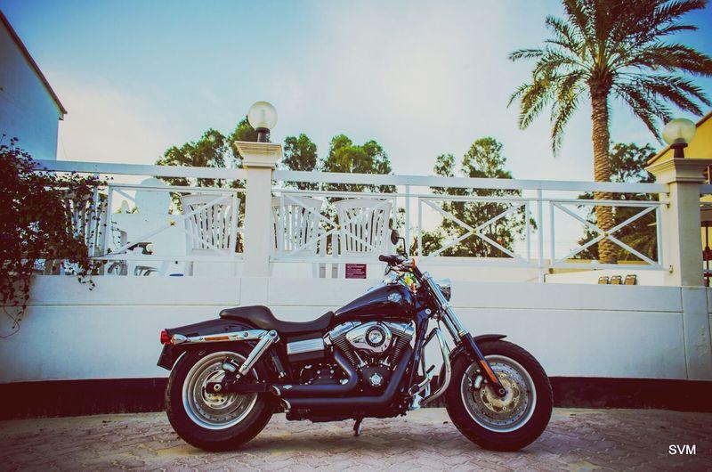 My ride. The Fat Bob 2012. :) Harley Davidson Fatboy Passion Biking