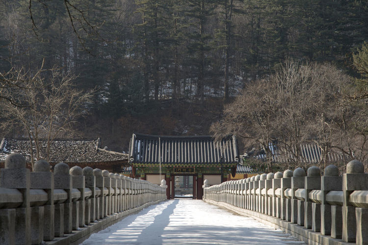 winter landscape of Baekdamsa, a famous Buddhism Temple in Inje, Gangwondo, South Korea Winter Architecture Baekdamsa Bare Tree Built Structure Cold Cold Temperature Day Full Length In A Row Nature Outdoors Railing Real People Sky Snow Tree Winter Land Winter Time