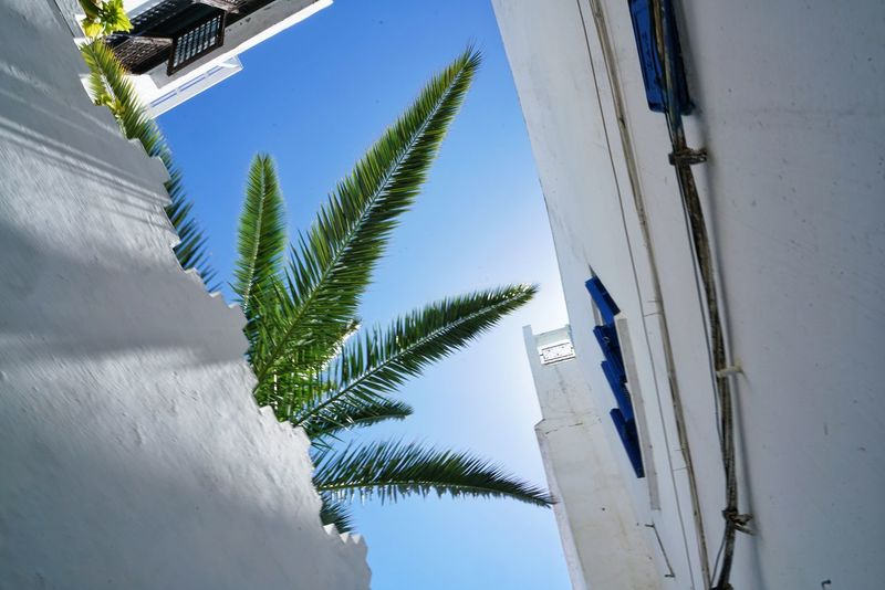 Morocco Photos Treepark Palm Tree Tree Sky Palm Tree Low Angle View Day Travel Sunlight Outdoors Architecture Clear Sky No People Building Exterior Nature Wall Light And Shadow Streamzoofamily