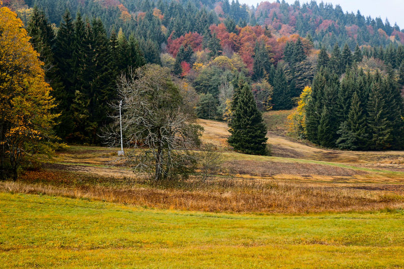 Agriculture Autumn Autumn Colors Change Countryside Day Farm Field Grass Green Green Color Landscape Leading Lush Foliage Mountain Non-urban Scene Remote Rural Scene Switzerland The Way Forward Tranquil Scene Tranquility Tree Trees