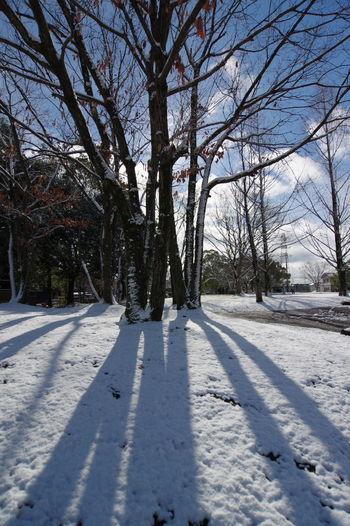 今朝も雪が降ってましたが、犬の散歩の時には青空も見えてました。 Snow Winter White Color Shadow Outdoors Tree No People Beauty In Nature Landscape Sky 冬の朝 公園 公園にて 広角レンズ 広角 影 Snowwhite Snow❄⛄ Snow White Park Beauty In Nature Nature Lover Nature
