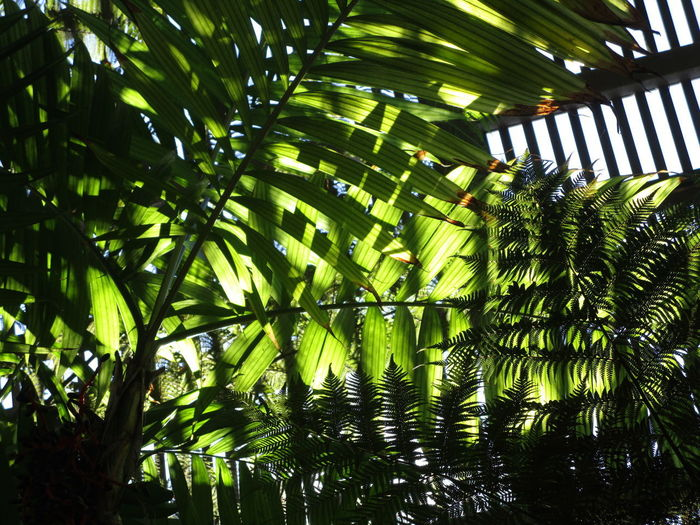 Beauty In Nature Day Freshness Frond Green Color Growth Leaf Low Angle View Nature No People Palm Tree Sunlit Leaves Tree Wood Slats