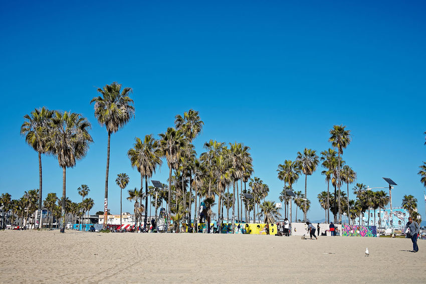 Pacific Venice Beach Beach Beauty In Nature Blue Clear Sky Day Nature No People Outdoors Pacific Ocean Palm Tree Sand Scenics Sky Tree