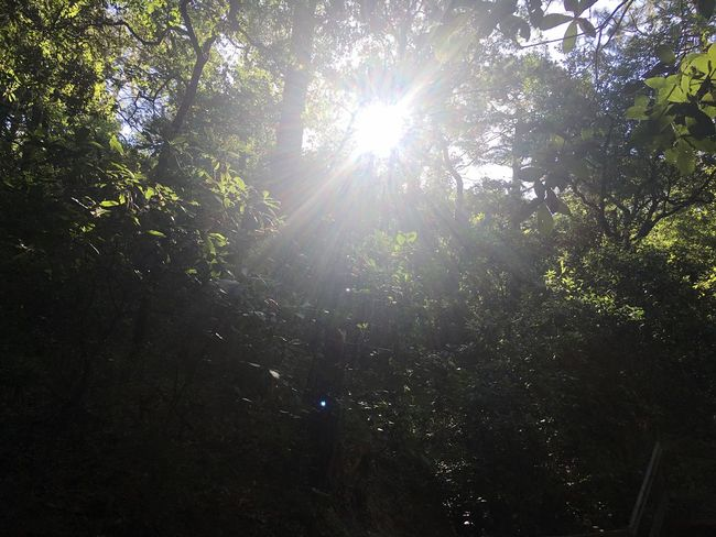 May 1 Tree Nature Forest Sunbeam Low Angle View Lens Flare Tranquility Beauty In Nature Sunlight Tranquil Scene Growth Outdoors Day Scenics No People Branch Sun Lush Foliage Tree Trunk Sky