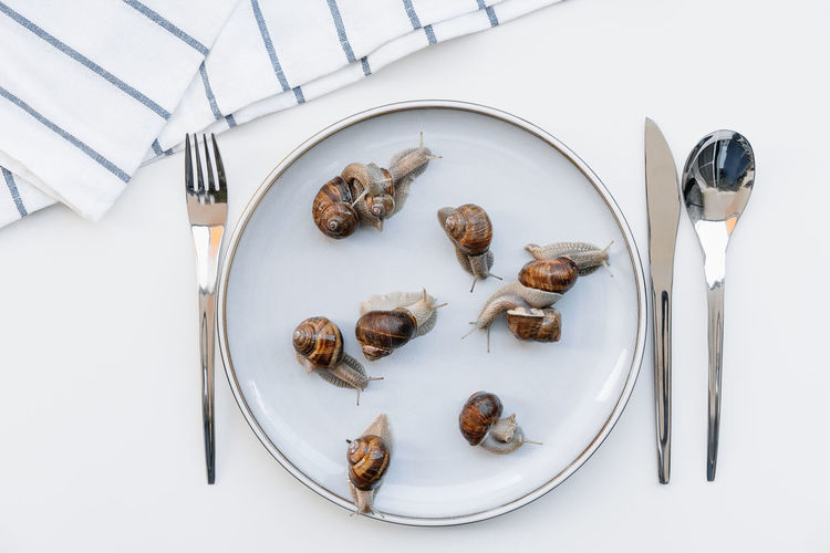 High angle view of escargit snail in plate on table