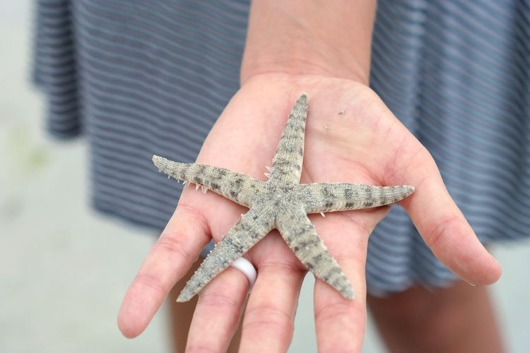 The starfish. Sea Marine Marine Animal Crustacean Starfish At Beach Holding Starfish Siargao Siargao Island Woman's Hand Holding Starfish  Showing Beach Beach Life Holding In Hand Woman Hand EyeEm Selects Starfish  Star Shape Human Body Part Human Hand One Person Only Women One Woman Only Sea Life Nature Lifestyles Adult People Summer Exploratorium International Women's Day 2019