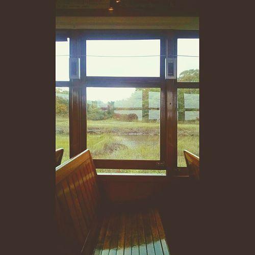 Window Looking