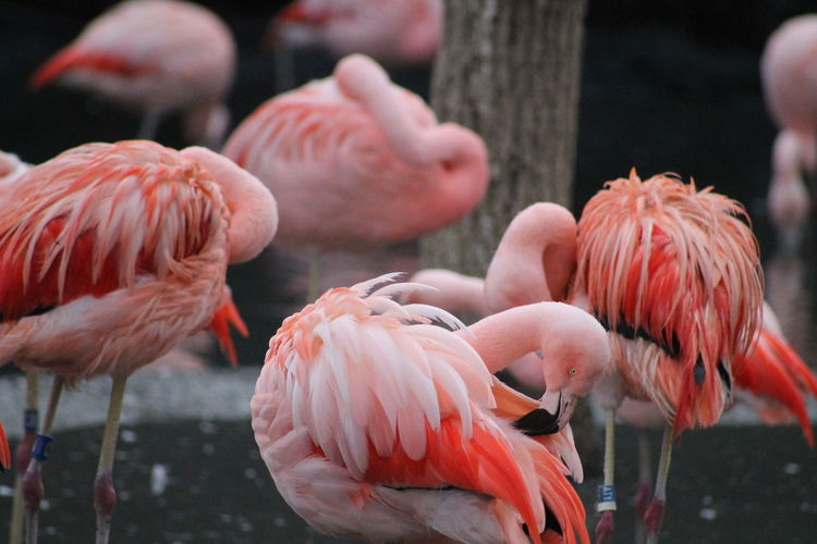 View of flamingos