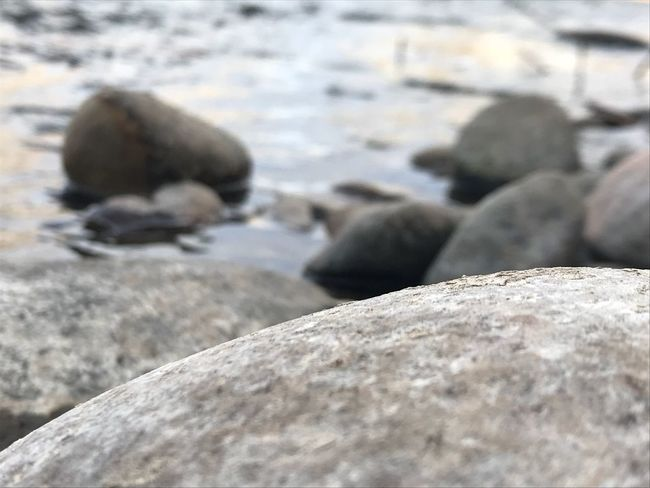 River rocks. Colorado Arkansas River Rock - Object Day Close-up Outdoors No People Textured  Selective Focus Nature