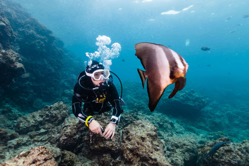 okinawa blue Adult Adults Only Adventure Bubble Day Leisure Activity Mature Adult Men Nature One Man Only One Person Only Men Outdoors People Scuba Diving Sea Sea Life Swimming UnderSea Underwater Underwater Diving Vacations Water Wetsuit