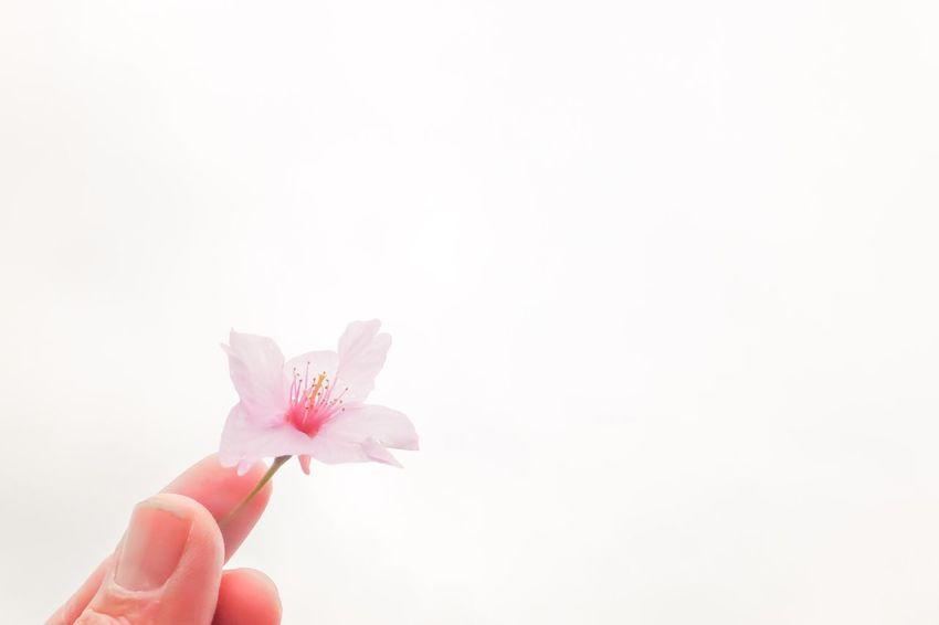 手のひらを太陽に 2011.3.11 Prayforjapan Flowers Flower Collection Flowerporn EyeEm Nature Lover EyeEm Flower