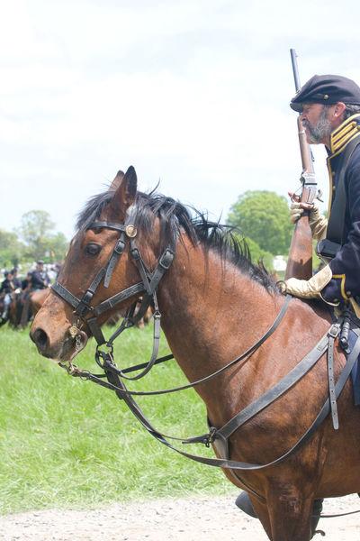 Civil War Civil War History Civil War Re-enactments Domestic Animals Horse Livestock Mammal Reenacting Reenactment Reenactors Working Animal