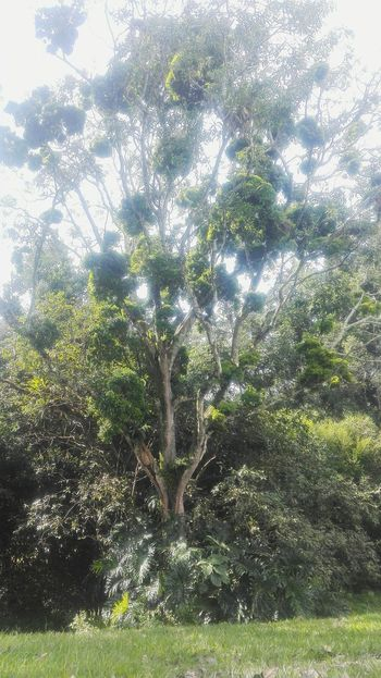Growth Nature Tree No People Low Angle View Backgrounds Beauty In Nature Green Color Sky Full Frame Day Close-up Outdoors Gplaymini Huawei Eeyem Photography First Eyeem Photo Paisaje Colombiano Eyemphotos Jilroa EyeEm Gallery Plant Green Color Nature Beauty In Nature