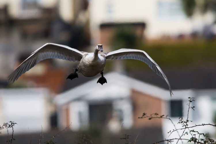 Seagull flying in a row