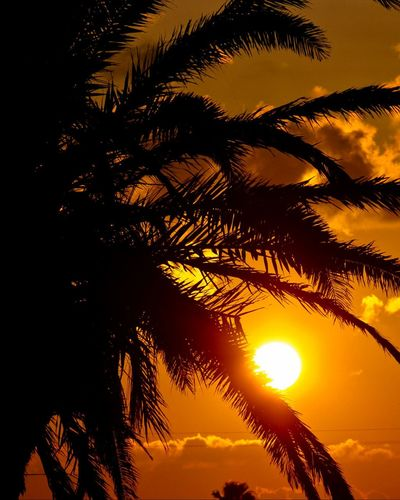 Clouds And Sky Sunset Silhouette Sunsets Sun_collection Bestoftheday Eye4photography  Sun_collection, Sky_collection, Cloudporn, Skyporn Eyemphotography Sunrise_sunsets_aroundworld Eyem Best Shots Sunset #sun #clouds #skylovers #sky #nature #beautifulinnature #naturalbeauty Photography Landscape Sunset #sun #clouds #skylovers #sky #nature #beautifulinnature #naturalbeauty #photography #landscape Natural Simplicity EyeEm Best Shots - Nature EyeEm Best Shots Sunset_captures Sunset_universe Learn & Shoot: Simplicity Sunset Silhouettes Sunset_collection Beach Sunset Eye Em Best Shots Sea Side