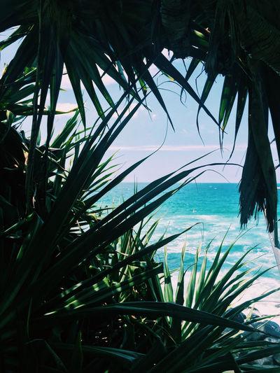Sea Sea And Sky Seaside Sea View Photo♡ Summer Photography Photo Paradise Beautiful Landscape Beatiful Sea Lendscape Beautiful View Deep Blue Blue Ocean View Ocean Beautiful Nature Nature Photography Nature Naturelovers Natural Beauty View Photograph Plants