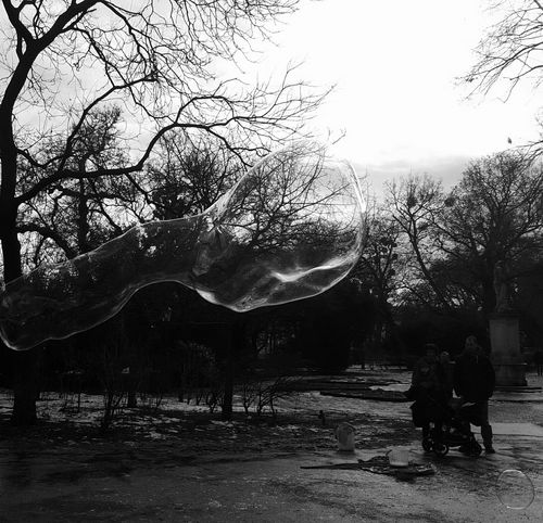 Silhouette Beauty In Nature No People Outdoors Blackandwhite Black And White Black & White Blackandwhite Photography Black And White Photography Bestoftheday Best Of EyeEm Nature Day Bubbles Bubble Bub Bubbles... Bubbles...Bubbles.... Bubbly Bubles Sky Tree Park Park Life Tree Fun
