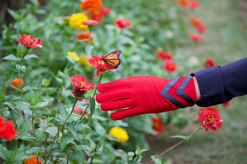 Butterfly Flower Human Hand Hand Animal Themes Animal Animal Wildlife Flowering Plant Human Body Part One Animal Insect Animals In The Wild Plant Beauty In Nature Freshness One Person Focus On Foreground Animal Wing Day Fragility