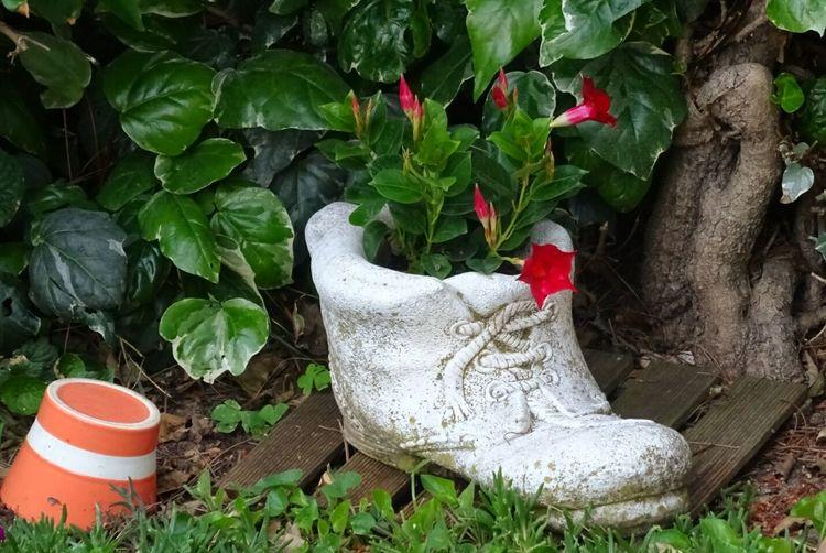 Décoration Jardin Jardinière Fleurs Du Jardin Fleur ♡ Fleur Fleurs Flower Flowers 🌸🌸🌸